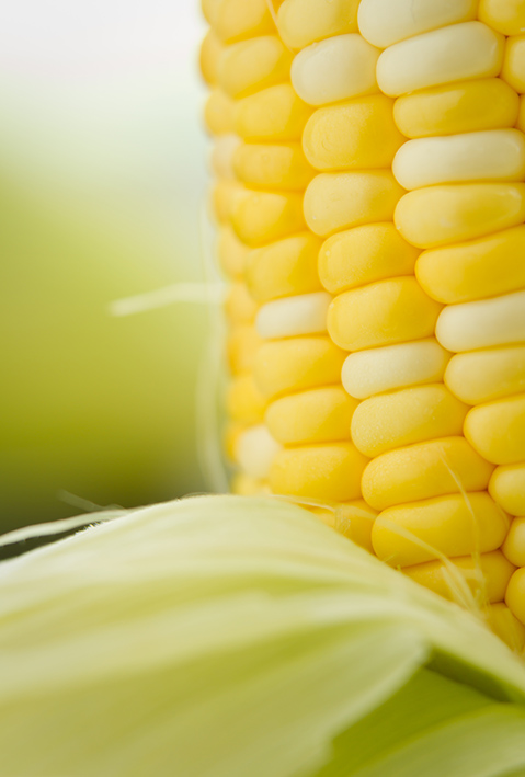 Sweet corn wholesale